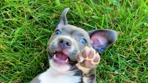 canine liability coverage